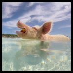 Swimming Pigs Charter with kiteboarding